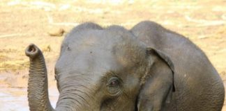 Elephants turn to crowdfunding, for a better life
