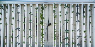 Vertical Farming Envisages Profitable and Suitable Agriculture Business